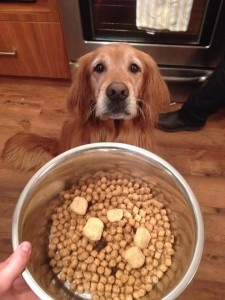 Sad Sadie with food bowl 2015