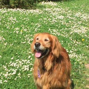 Sadie at Dominion Brook Park with white flowers May 2015
