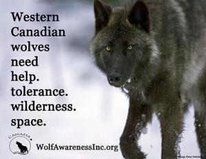 Western Canada Wolf