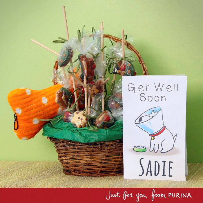 Sadie card from Purina
