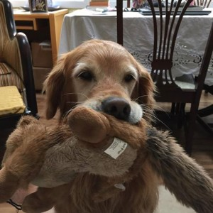 Sadie with squirrel stuffie