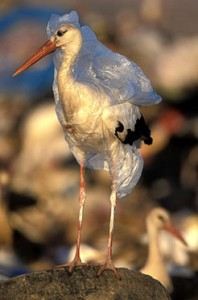 bird covered in plastic