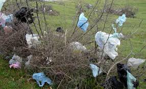 plastic bag in trees