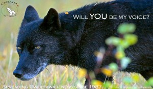 will you be my voice wolf photo