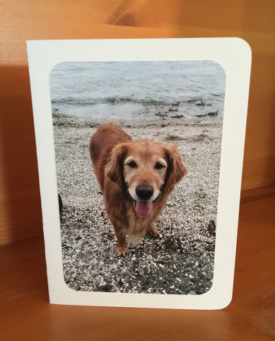 Sadie on beach photo card