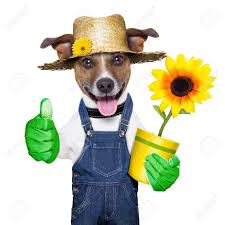happy gardener dog