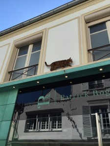 cat-on-building-in-sceaux