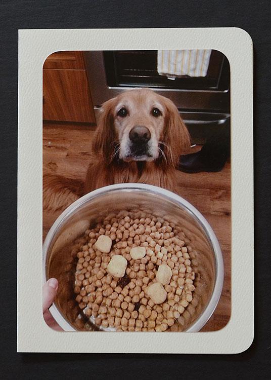 dog-card-sadie-with-bowl-large