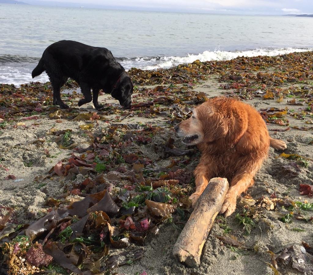 Jadie & Sadie, Island View Beach