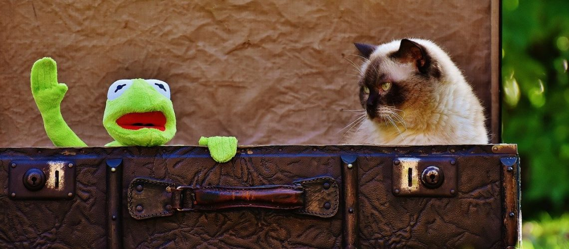 kermit and cat in suitcase